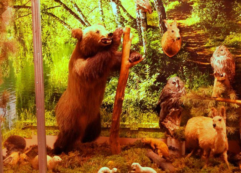 Обновлённая выставка животного мира Топчихинского района